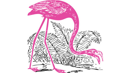Pink Flamingo Vector Packs