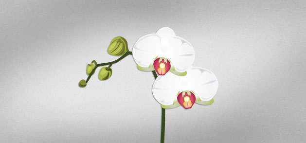 Orchid Vector Art Vector Packs
